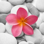39-Pink Flower on White Rocks